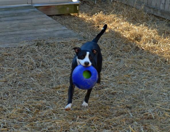 jolly-ball