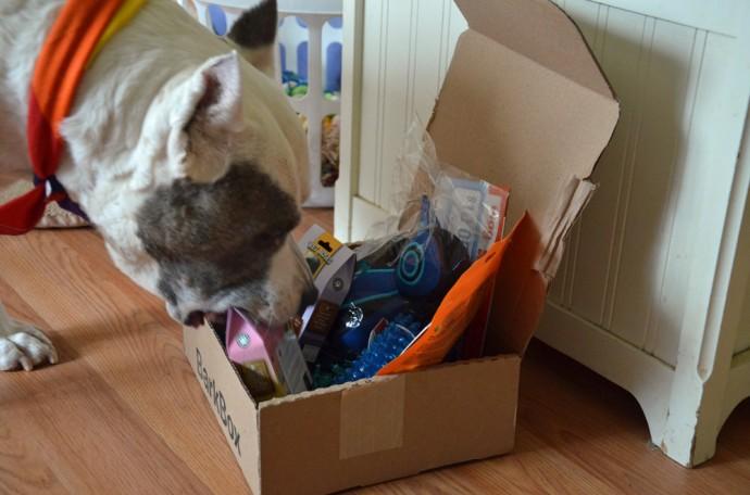 bark box Mr B