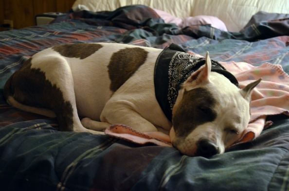 B bed bandana