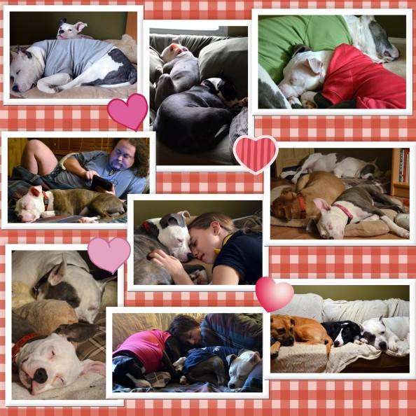 Valentine's Day Snuggles