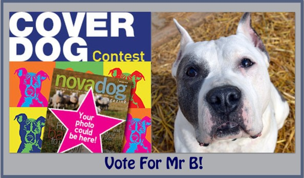 B contest