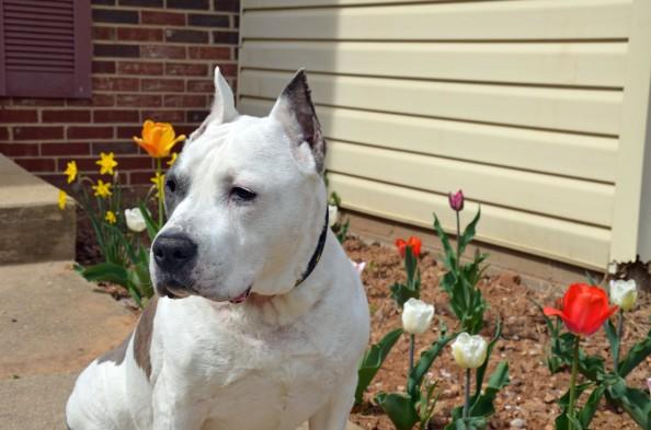 Apr-19-2014-flowers-(10)
