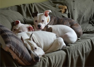 3 dogs Jun 13 2014