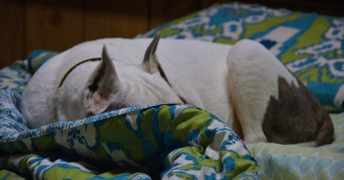Sep 28 2014 B bed