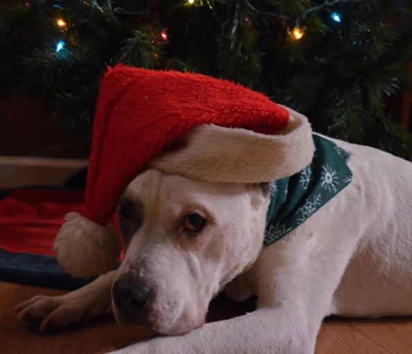 Dec 23 2014 B hat