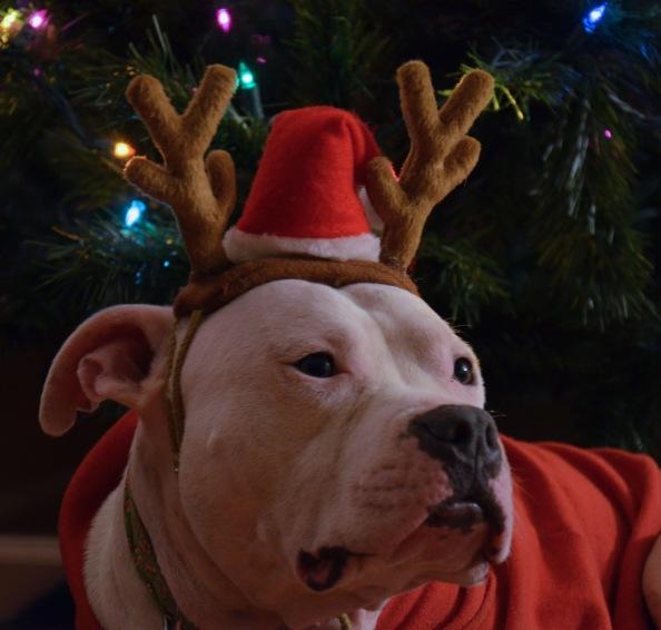 Dec 23 2014 ted hat