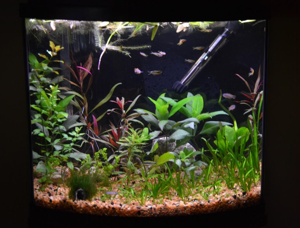 nano fish raw feeding fun page 4