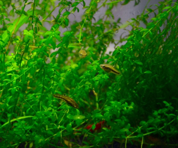 Sep 12 2015 jungle fish and shrimp