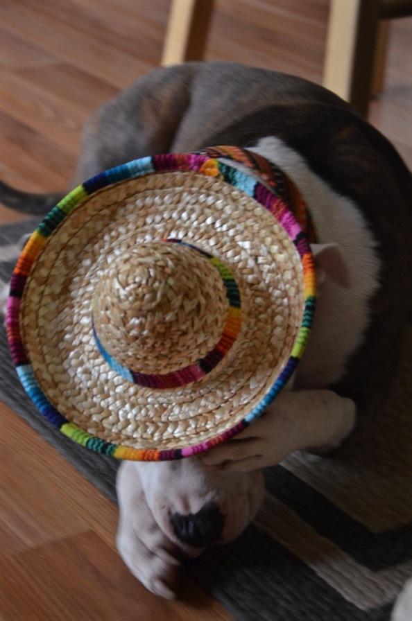 Oct 09 2015 doodle hat