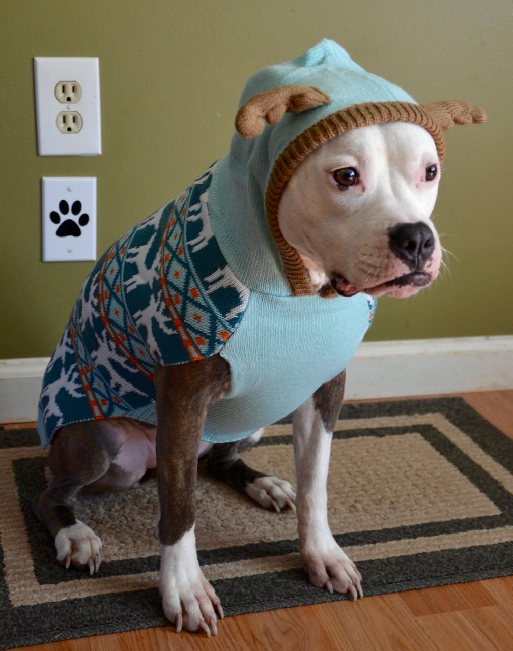 Hoodie Pit Bull Sweater